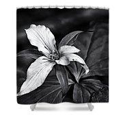 Trillium - Black And White Shower Curtain