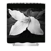 Trillium Flower In Black And White Shower Curtain