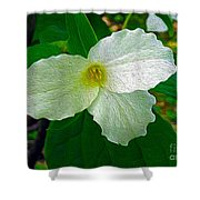 Trillium In The Forest Shower Curtain