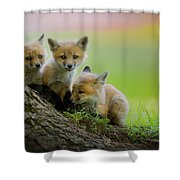 Trio Of Fox Kits Shower Curtain by Everet Regal