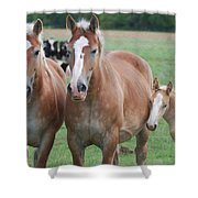 Trio Of Horses 2 Shower Curtain