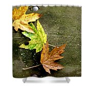 Trio Of Leaves Shower Curtain