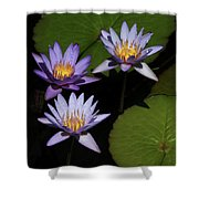 Trio Of Purple Water Lilies Shower Curtain