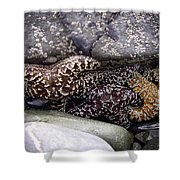 Trio Of Starfish Shower Curtain