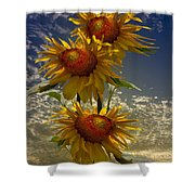 Trio Of Sunflowers Shower Curtain