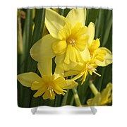 Tripartite Daffodil Shower Curtain