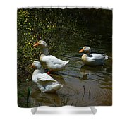Triple Ducks Shower Curtain
