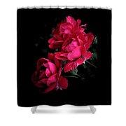 Triple Rose  Shower Curtain