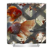 Triple Tail Goldfish Shower Curtain