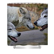Triple Take Shower Curtain