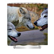 Triple Take Painted Shower Curtain