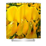 Triplet Shower Curtain
