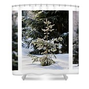 Triptych - Christmas Trees In The Forest - Featured 3 Shower Curtain