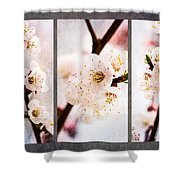 Triptych Light Of Spring 1 Shower Curtain