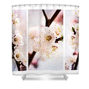 Triptych Light Of Spring 2 Shower Curtain
