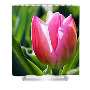 Triumph Tulip Shower Curtain