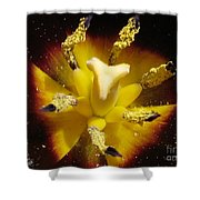 Triumph Tulip Named Gavota Shower Curtain