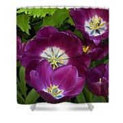 Triumph Tulips Negrita Variety Shower Curtain