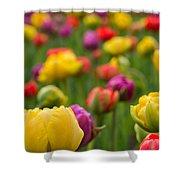 Triumphant Tulips Shower Curtain