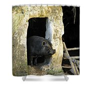 Troglodyte Pig Shower Curtain