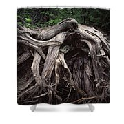Troots Of A Fallen Tree By Wawa Ontario Shower Curtain