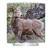 Wild Bighorn Shower Curtain