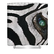 Trophy Hunter In Eye Of Dead Zebra Shower Curtain