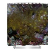 Tropica Fish Shower Curtain
