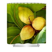 Tropical Almond Shower Curtain