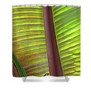 Tropical Banana Leaf Abstract Shower Curtain