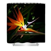 Tropical Bloom Shower Curtain