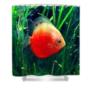 Tropical Discus Fish Shower Curtain by Amy Vangsgard