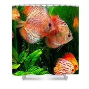Tropical Discus Fish Group Shower Curtain