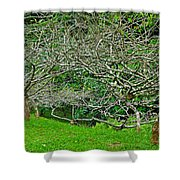 Tropical Entanglement Shower Curtain