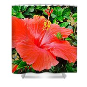 Tropical Explosion Shower Curtain