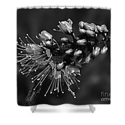 Tropical Flower Caesalpinia Pulcherrima Shower Curtain