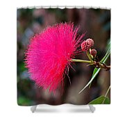 Red Mimosa Flower Shower Curtain