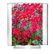 Tropical Flowers Of South Florida Shower Curtain