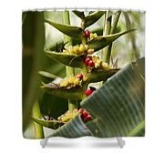 Tropical Fountain Of Seeds Shower Curtain