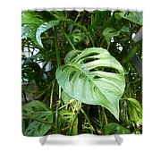 Tropical Green Foliage Shower Curtain