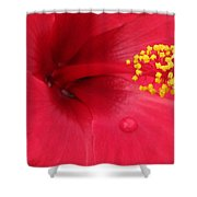 Tropical Hibiscus - Antigua Wind 01 Shower Curtain