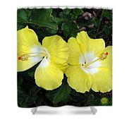 Tropical Hibiscus - Bonaire Wind 01 Shower Curtain