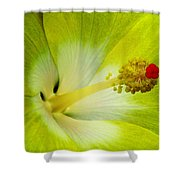 Tropical Hibiscus - Bonaire Wind 03a Shower Curtain