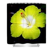 Tropical Hibiscus - Bonaire Wind 04a Shower Curtain