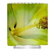 Tropical Hibiscus - Bonaire Wind 06a Shower Curtain