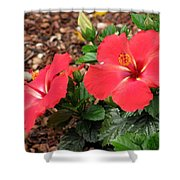 Tropical Hibiscus - Starry Wind 01 Shower Curtain
