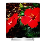 Tropical Hibiscus - Starry Wind 01a Shower Curtain