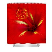 Tropical Hibiscus - Starry Wind 02a Shower Curtain