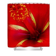 Tropical Hibiscus - Starry Wind 03a Shower Curtain