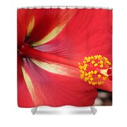 Tropical Hibiscus - Starry Wind 04 Shower Curtain